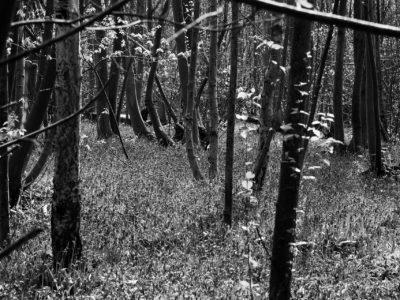 Ancient woodlands under threat